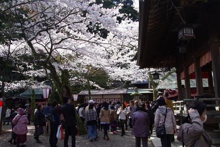 Kanegasaki14