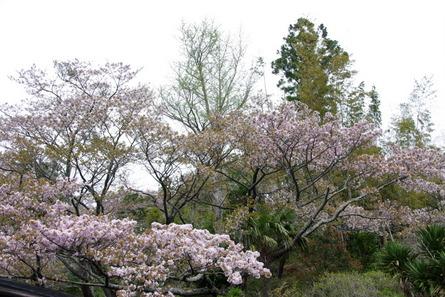 Yokowa02