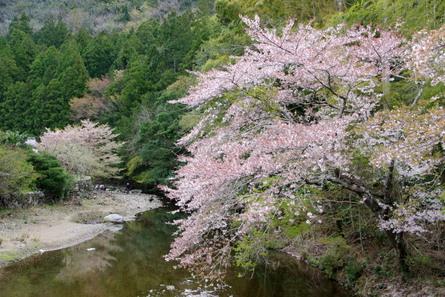Yokowa10