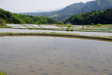 Sakamoto03