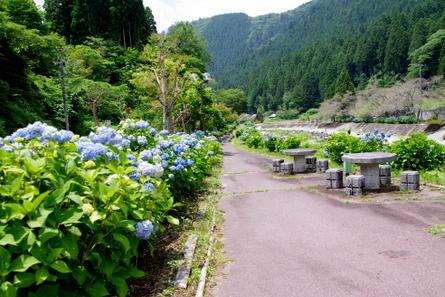 Sugishima01