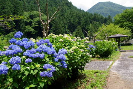 Sugishima11