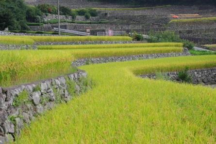 Fukano12