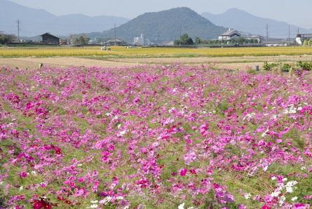 Okuyama01
