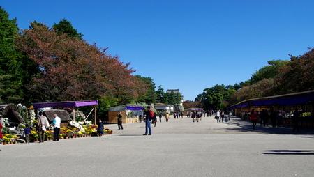 Nagoyakiku02001