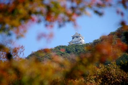 Gifu201