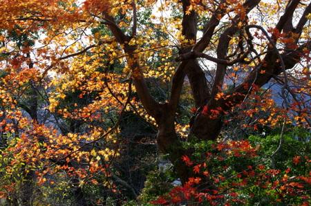 Kenshin13