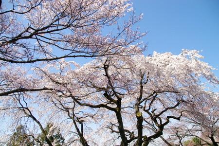 Kisogawa14