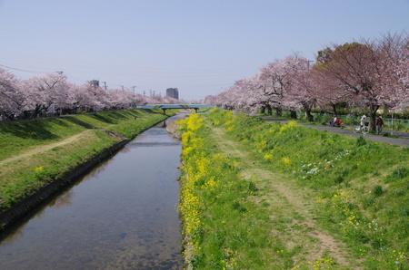 Sanagawa02