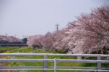 Sanagawa10