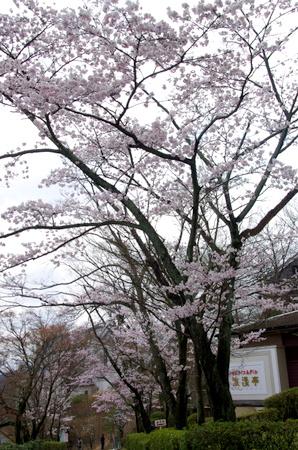 Meijimura03