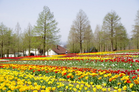 Blumen08