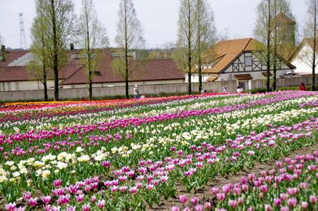 Blumen09