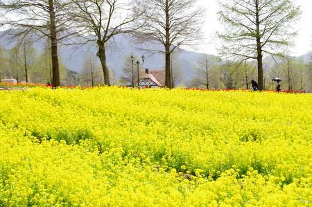 Blumen13