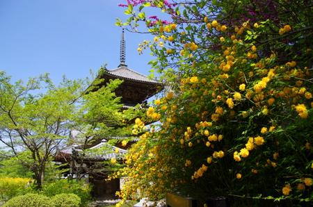 Tsubosaka15