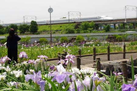Takamatsu13