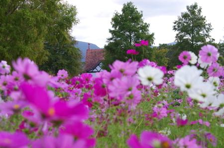 Blumen06