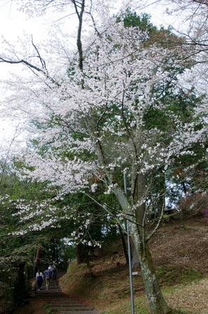 Ogura05