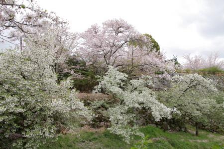 Koriyama06