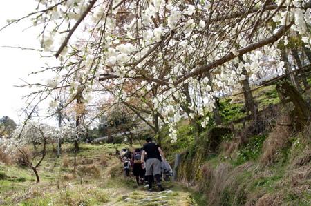 Yoshino110