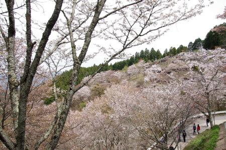Yoshino115