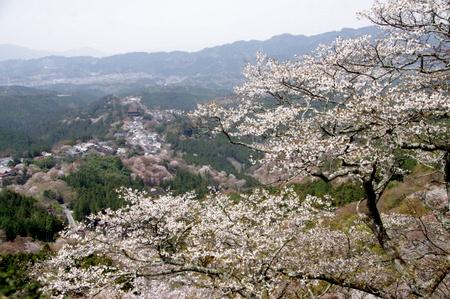 Yoshino204