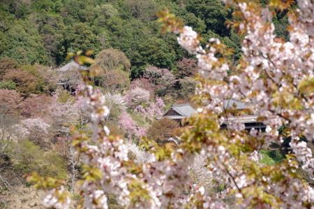 Yoshino211