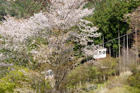 Yoshino216