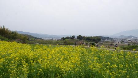 Yamanobe11