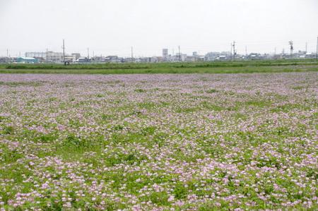 Takakuwa14