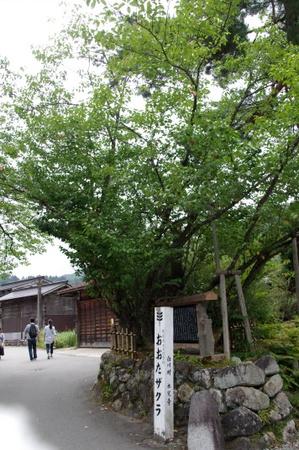 Shirakawago20