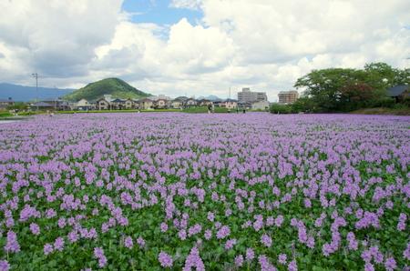 Kashihara04