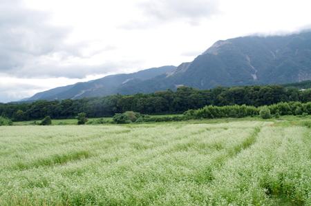 Fujiwaras08