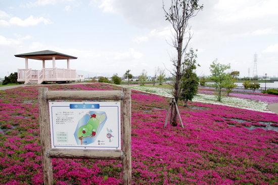 Yatomi04