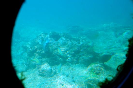 Aquap10