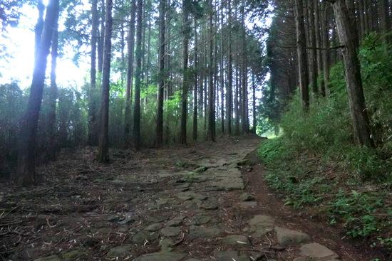 Hakonew09