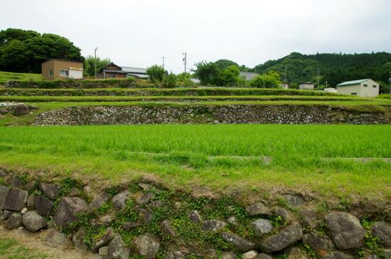 Sakamoto12