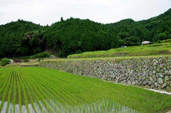 Sakamoto13