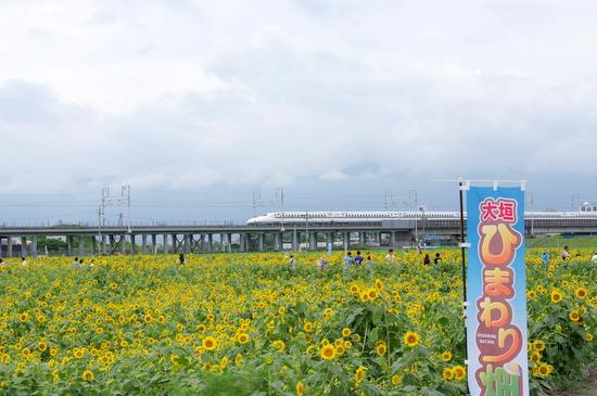 Ogakih01