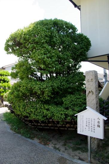 Akashib08