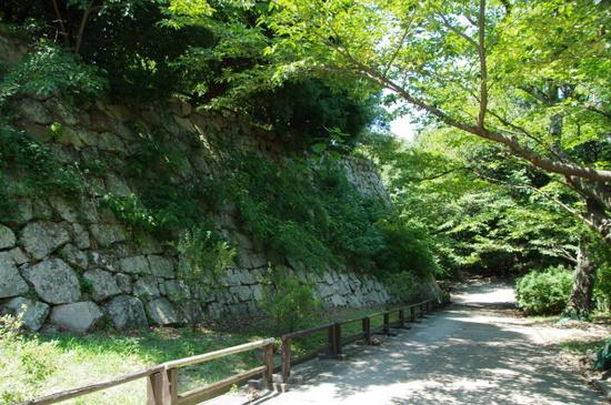 Akashijo15