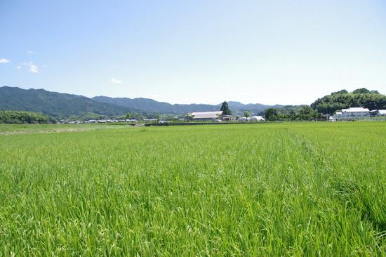 Kaguyama02