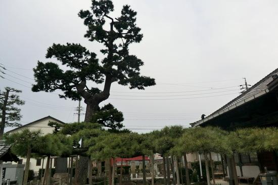 Hyakumagari13