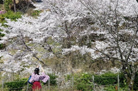 Meijimuras114