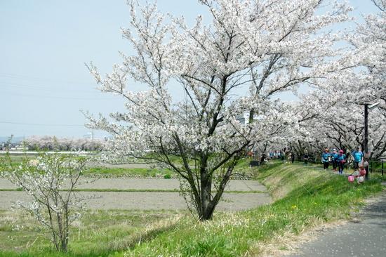 Gojyoro01