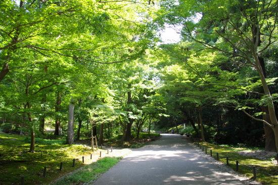 Nagoyazbo13