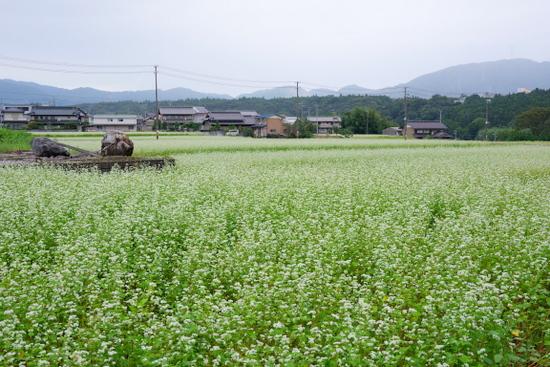 Fujiwarat13