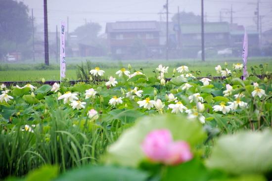 Morikawah215