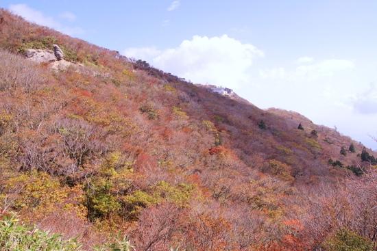 Gozaishoa12