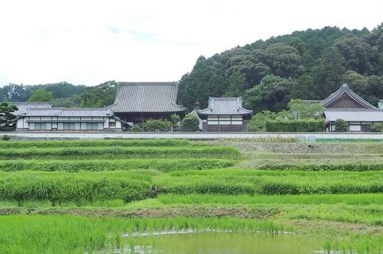 Taishimiti215
